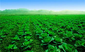 <b>绿色农业促转型:让咱的餐桌更健康</b>